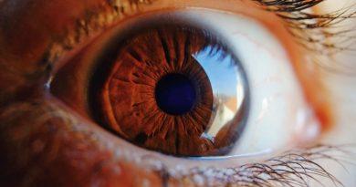 ретина